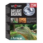 Daylight-Basking-FINAL