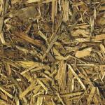 CM-Forest-Floor-Sample